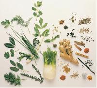 Indian Culinary Herbs