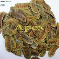 Cassia Angustifolia Pods