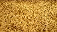 Sub Soiler Fodder Seeds