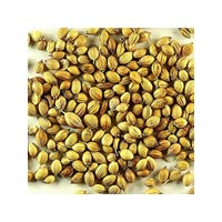 Coriander Seeds Oil