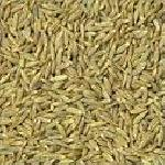 White Cumin Seeds (zeera)