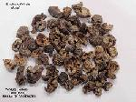 Emblica Officinale Extract
