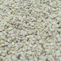 Offer Sesame Seed
