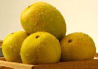Ripe Kesar Mango