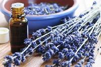 Herbal Fragrance