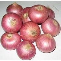 Onion Exporters