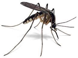 Mosquitoes Control Services