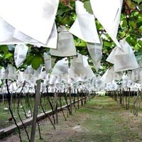 Nonwoven Fruit Covering Fabric
