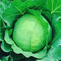 Vegetable Seeds of Cabbage Copenhagen