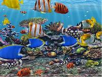 Marine Ornamental Fishes