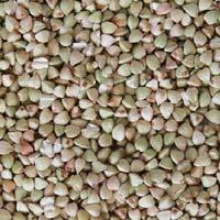Buckwheat (kuttu & Ragi)