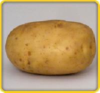 Kufri-jyoti Potato