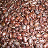 Indian Castor Seed