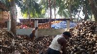 De husked Coconuts