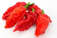 Ghost Pepper Pepper