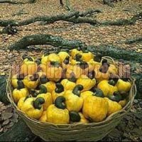 Brazil Raw Cashew Nuts