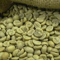 arabica green coffee