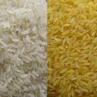 Common Rice