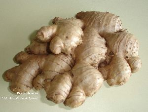 Fresh Ginger - High Fiber