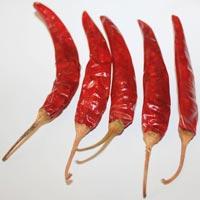 Red Chilli-341