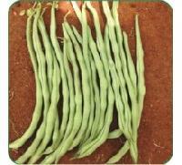Hybrid Pole Beans Seeds