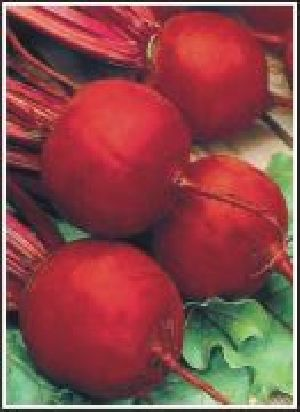 Beet Root (open Pollinated) Products