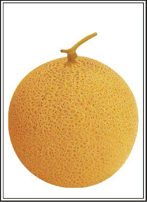 Hybrid Muskmelon Seed