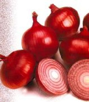 Super Selection Onion Seed