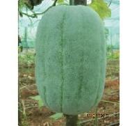 Hybrid Ash Gourd Seeds