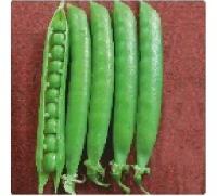 Hybrid Peas Seeds