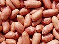 Bold Peanut