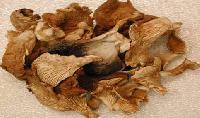 Oyster Dry Mushroom