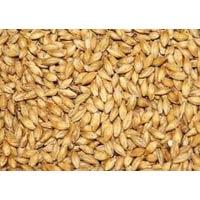Indian Barley