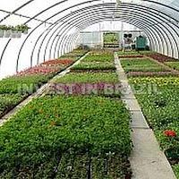 Agriculture Consultant
