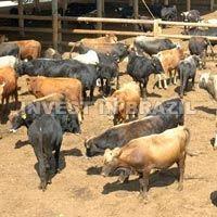 Farming Consultancy
