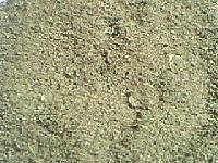 Ram Tulsi Leaves - ( Pure Organic )