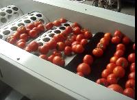 Tomato Sorting Machine