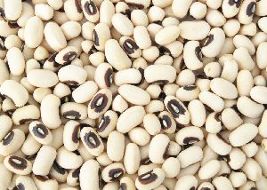 Pulses in Andhra Pradesh - Manufacturers and Suppliers India