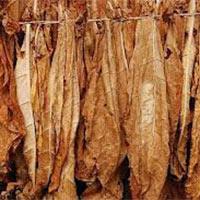 Tobacco Fragrance