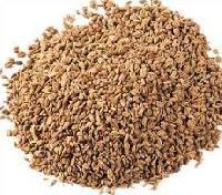 Ajmoda Seeds
