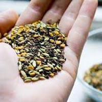 Ajmud Seeds