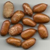 Rivemona Seeds