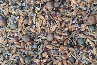 Forage Seed