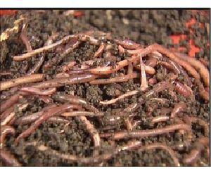 Speciality Fertilizer
