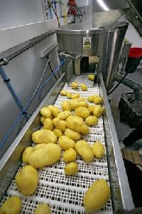 Potato Inspection Conveyor