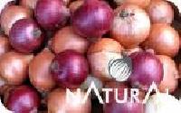 Fresh Pink Onions