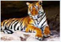 Rajasthan Wildlife Tour Packages