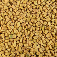 Fenugreek Seed