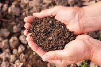 Soil Probiotic