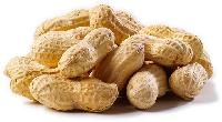 Fresh Raw Peanut